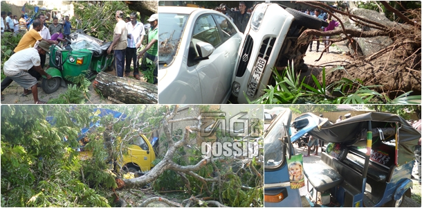 Three injure as tree falls in Kynsey road : Vehicles too damaged