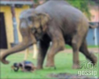 elephant attack in anuradhapura